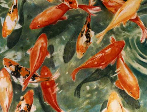 Poissons rouges la galerie d 39 isabelle passama for Prix des poissons rouges
